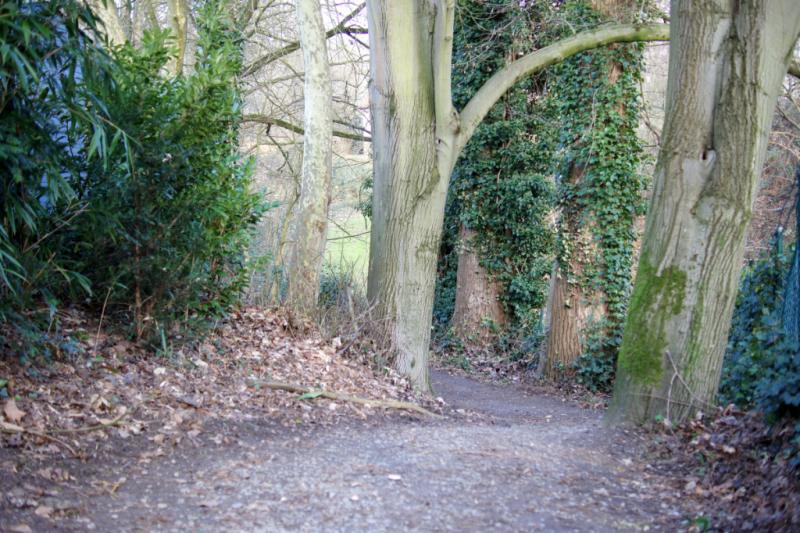 good vibes im Januar Waldlauf