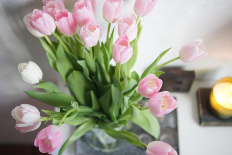 good vibes im Januar Tulpen