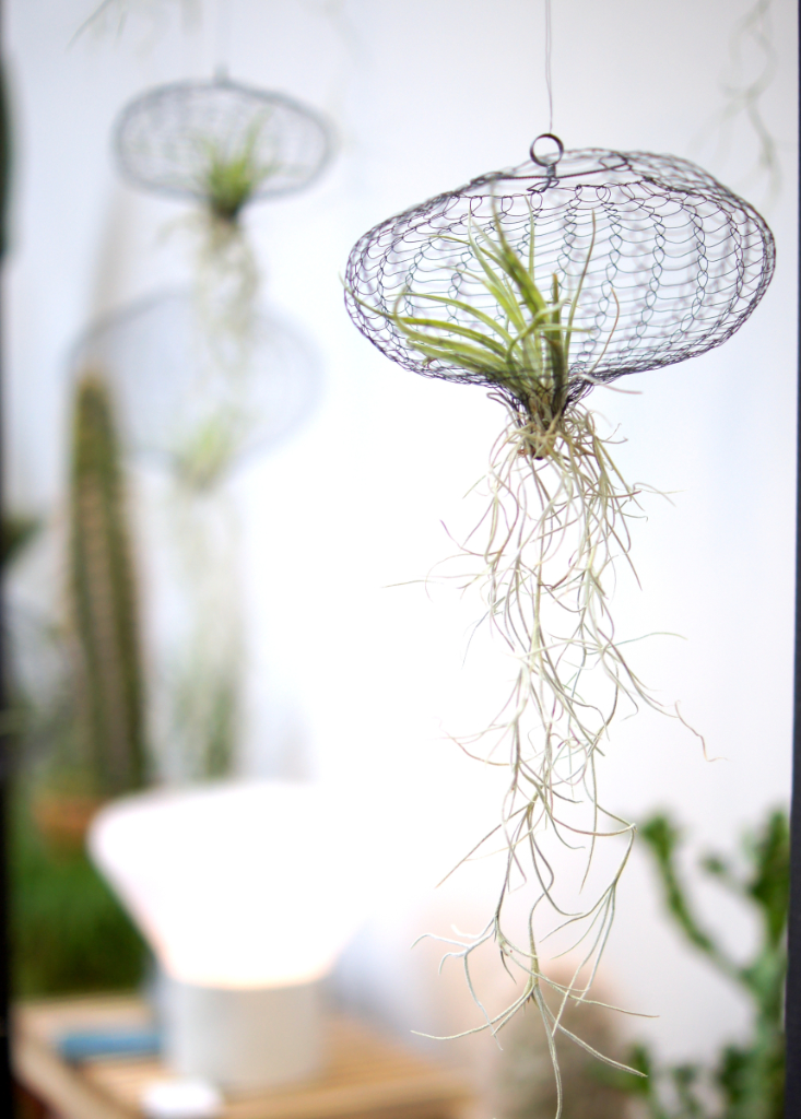 Airplants imm cologne 2017